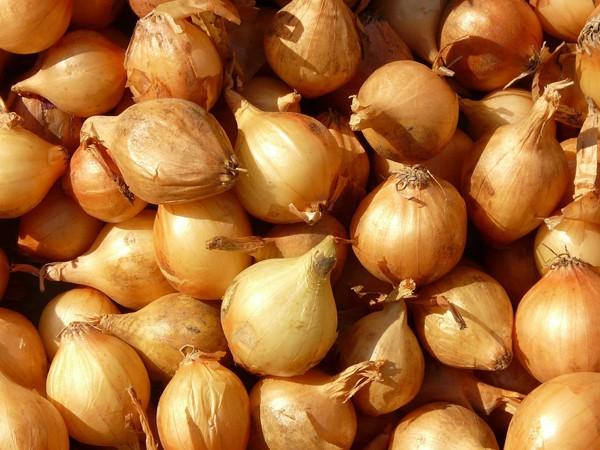 Allium cepa var. aggregatum