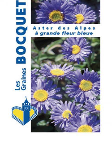 Aster des Alpes 'Grande fleur bleue'