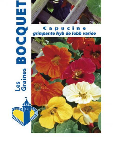 Capucine hybride de Lobb varié