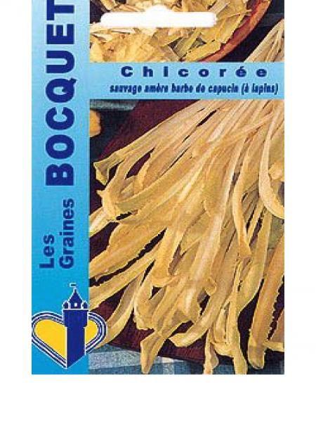 Chicorée à larges feuilles 'Barbe De Capucin'