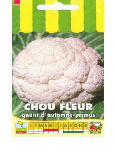 Chou fleur 'Géant d'Automne-Primus'