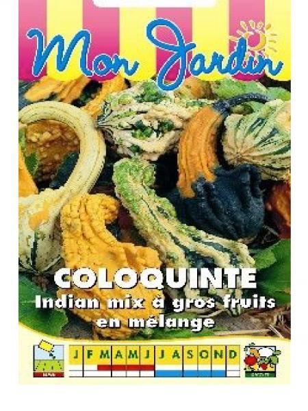 Coloquinte 'Indian Mix Gros fruits'