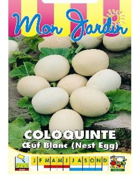 Coloquinte 'Oeuf Blanc'