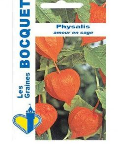 Groseille du Cap Preciosa - Physalis