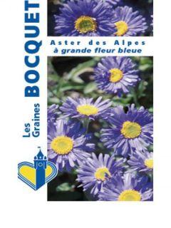 Aster alpinus Goliath - Aster des Alpes