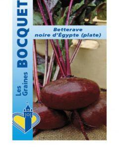 Betterave noire plate d'Egypte - Beta vulgaris