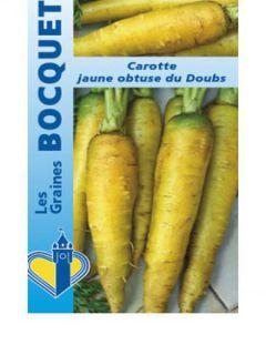 Carotte fourragère jaune du Doubs - Daucus carota