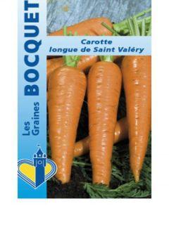 Carotte Valery - Daucus carota