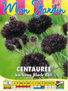 Graines de Centaurée Black Ball - Centaurea cyanus