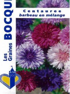 Centaurée à fleurs doubles en mélange - Centaurea cyanus