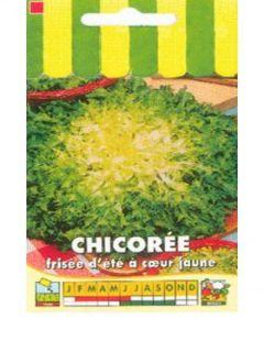 Chicorée frisée d'été à Cœur Jaune - Cichorium endivia crispum