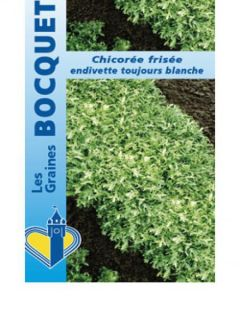 Chicorée frisée Endivette (Toujours blanche) - Cichorium endivia var. crispum