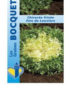 Chicorée frisée Fine de Louviers - Cichorium endivia