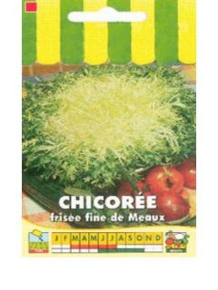 Chicorée frisée Fine de Meaux - Cichorium endivia var. crispum