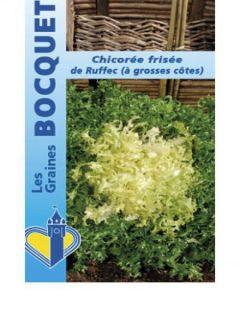 Chicorée frisée De Ruffec - Cichorium endivia var. crispum