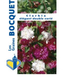 Clarkia Apple Blossom