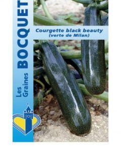 Courgette Verte de Milan ou Black Beauty - Cucurbita pepo