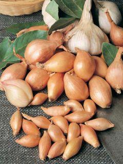 Echalote Jermor - Allium cepa - sac de 500gr