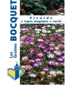 Ficoïde tricolore Magic Carpet
