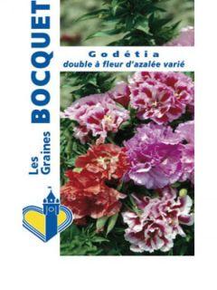 Graines de Godetia à fleurs d'azalée en mélange