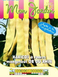 Haricot à rames mangetout beurre Merveille de Venise ou Or du Rhin