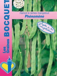 Haricot à rames mangetout Phénomène