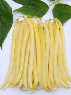 Haricot nain mangetout beurre Fructidor
