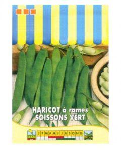 Haricot à rames à écosser Soissons vert - Phaseolus vulgaris