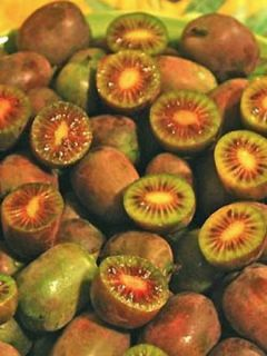 kiwi de Sibérie Ken's Red - KiWai