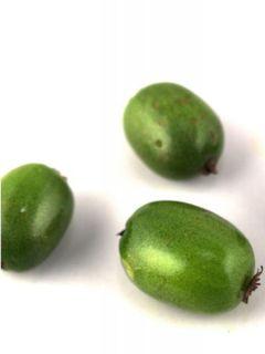 Kiwi arguta Vitikiwi - Kiwaï