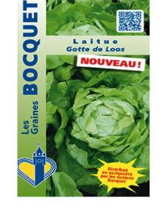 Laitue pommée Gotte de Loos - Lactuca sativa