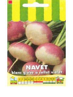 Navet Blanc Globe Collet Violet - Brassica rapa