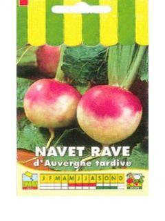 Navet Rave D'Auvergne Tardif - Brassica rapa