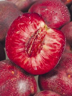 Nectarinier Sanguine d'Auvergne - Georges Delbard