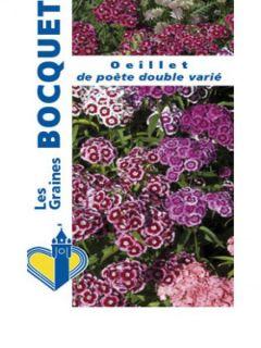 Graines d'Oeillet de Poète à fleurs simples en mélange - Dianthus barbatus