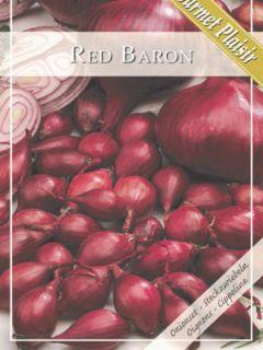 Oignon Red Baron Bio - Allium cepa