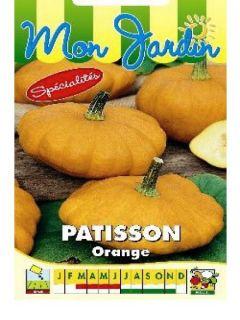 Courge Pâtisson orange - Cucurbita pepo