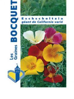 Graines de Pavot de Californie Monarch Mixed - Eschscholzia californica