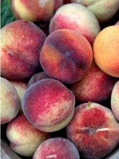 Pêcher De Vigne Jaune - Prunus persica