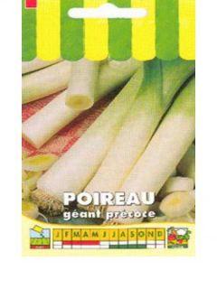 Poireau Géant Précoce - Allium porrum