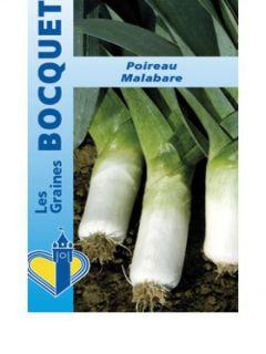 Poireau Malabare - Allium porrum