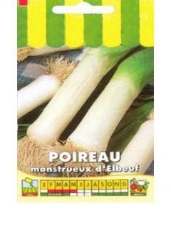 Poireau Monstrueux d'Elbeuf - Allium porrum