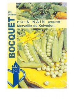 Pois nain Merveille de Kelvedon (grains ridés ) - Pisum sativum