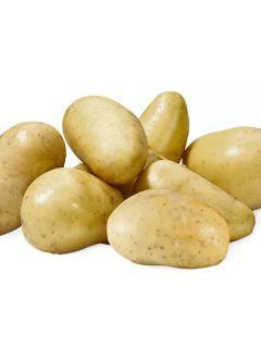 Pommes de terre Amandine - Solanum tuberosum