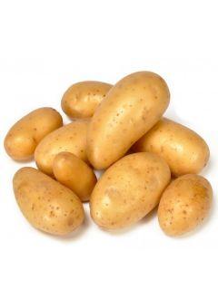 Pommes de terre BF 15 - Solanum tuberosum