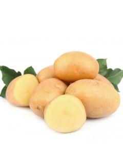 Pommes de terre Bintje - Sac de 25 plants