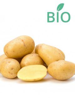 Pommes de terre Blanche Bio - Solanum tuberosum