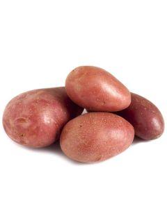 Pommes de terre Cherie - Solanum tuberosum