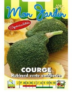 Potiron Green Hubbard - Cucurbita maxima