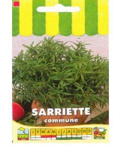 Sarriette annuelle - Satureja hortensis